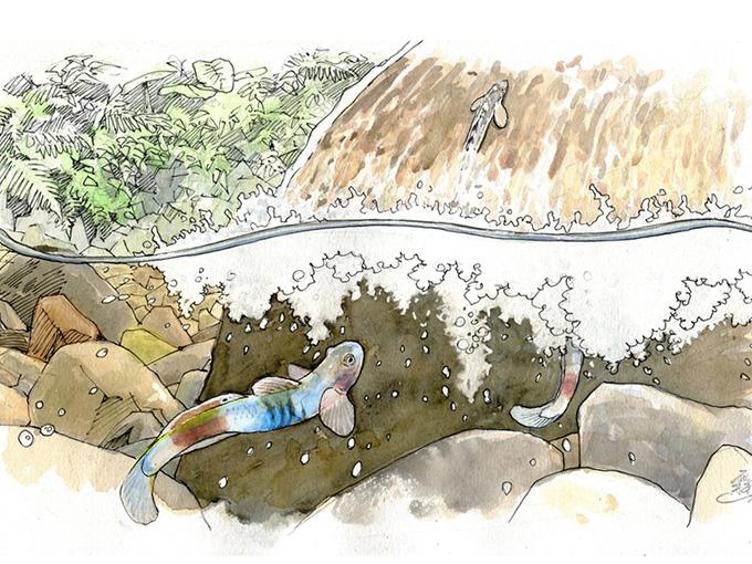 從河說起:溪流秘境的「韌」證