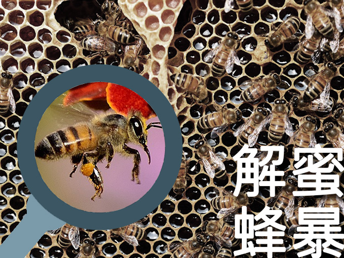 內雙溪自然中心:解蜜蜂暴-微距