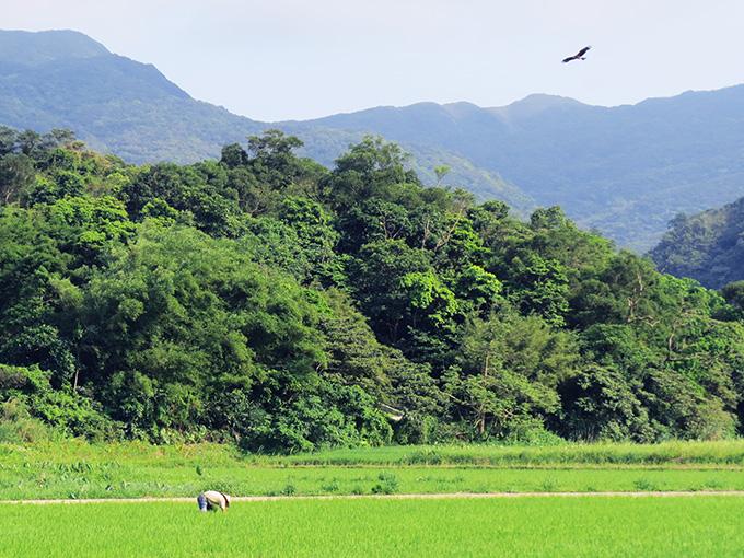 田寮洋綠網小旅行-看天-農事與鳥類棲地觀察