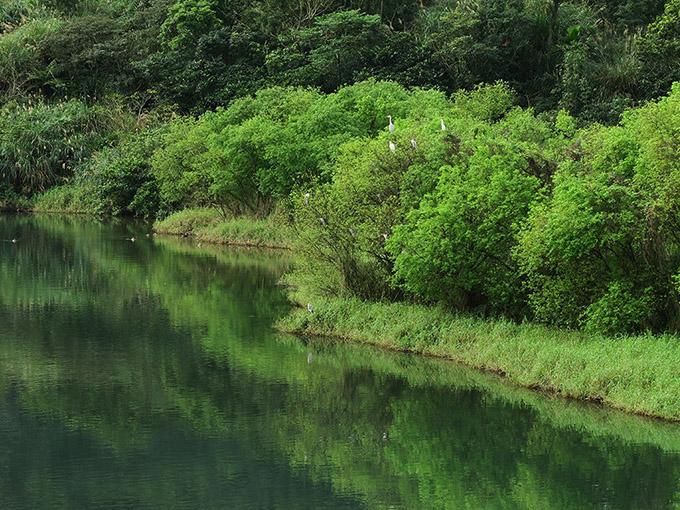 橋上看景—水濱樹林